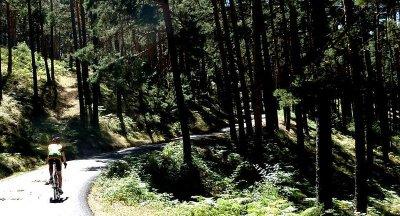 Precioso tránsito por los Pinares de Valsaín. Foto de Burum.